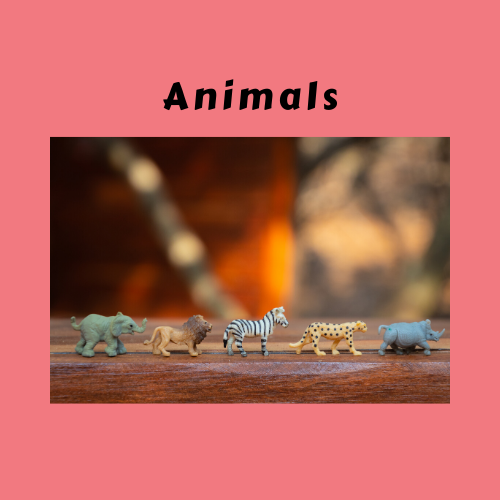 "Book Genre Block - ""Animals"" with image of toy animals lined up"
